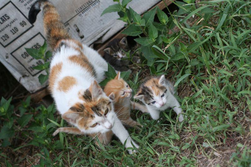 Kittens-1