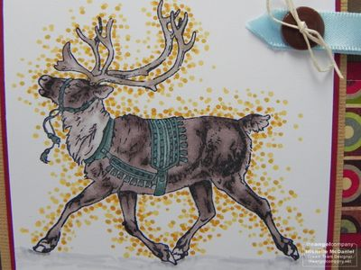 Xmas in July Reindeer upclose